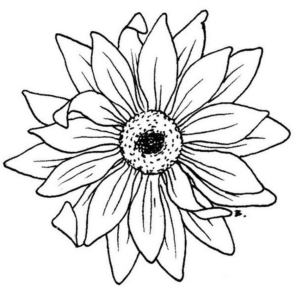 Black And White Sunflower Drawing | Free download best Black And ...