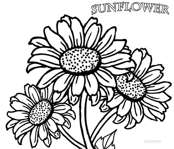 736x630 152 Best Sunflowers Images Sunflowers, Maths