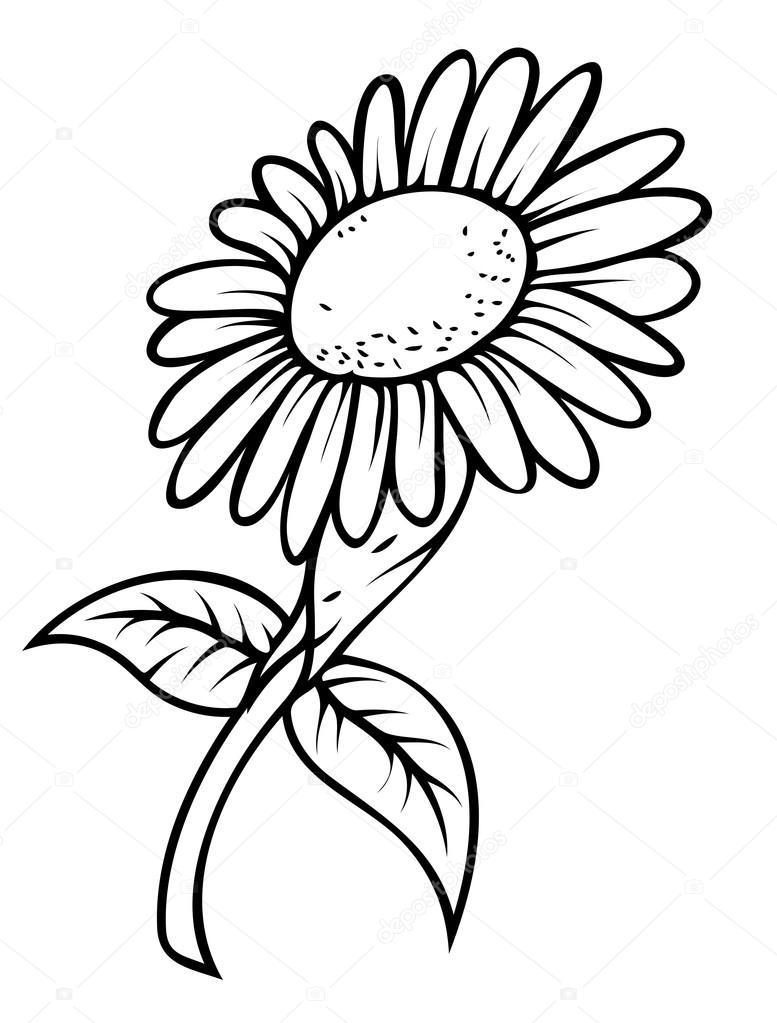 777x1023 Retro Sunflower Drawing Stock Vector Baavli