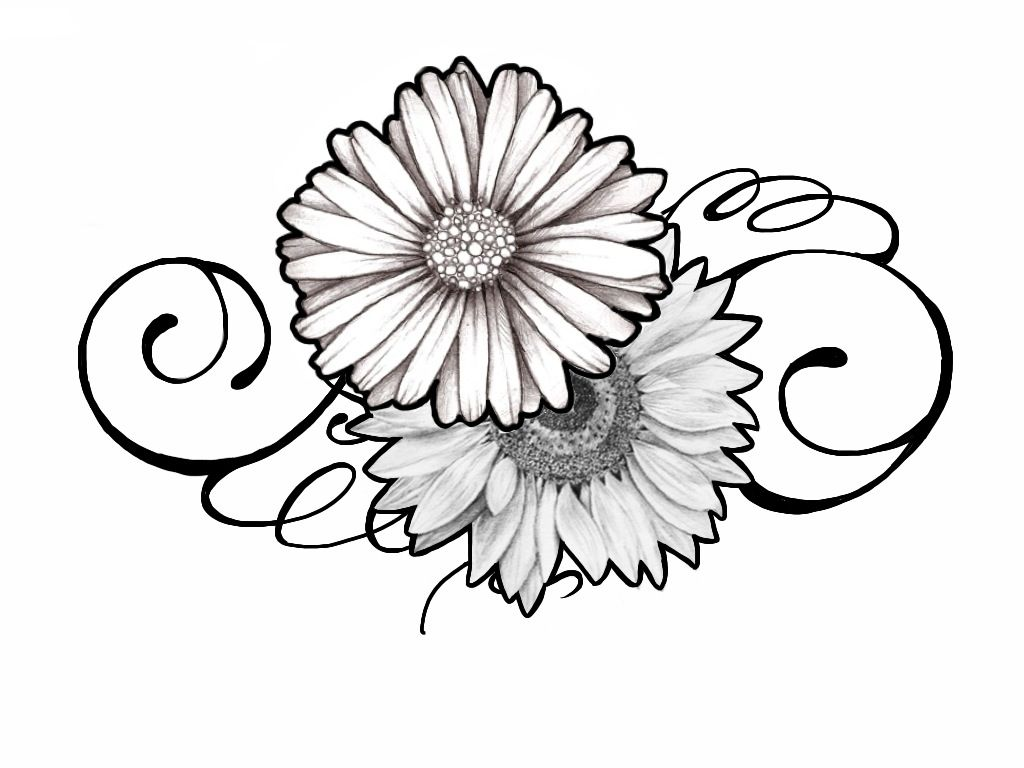 Gerbera Daisy Line Drawing Black And White Sunflo...