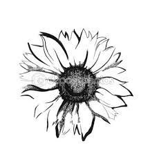 217x233 Black And White Sunflower Drawing