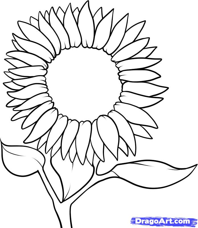 695x801 How To Draw A Sunflower Step 6 Embroidery
