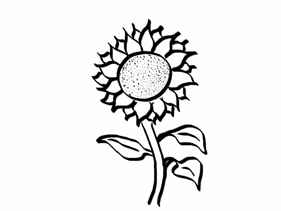 900x675 How To Draw A Good Enough Sunflower