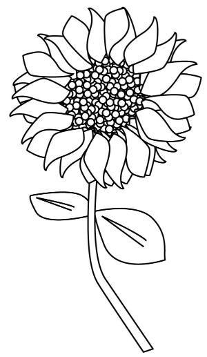 300x517 83 Best Sunflower Images Art Drawings, Letter