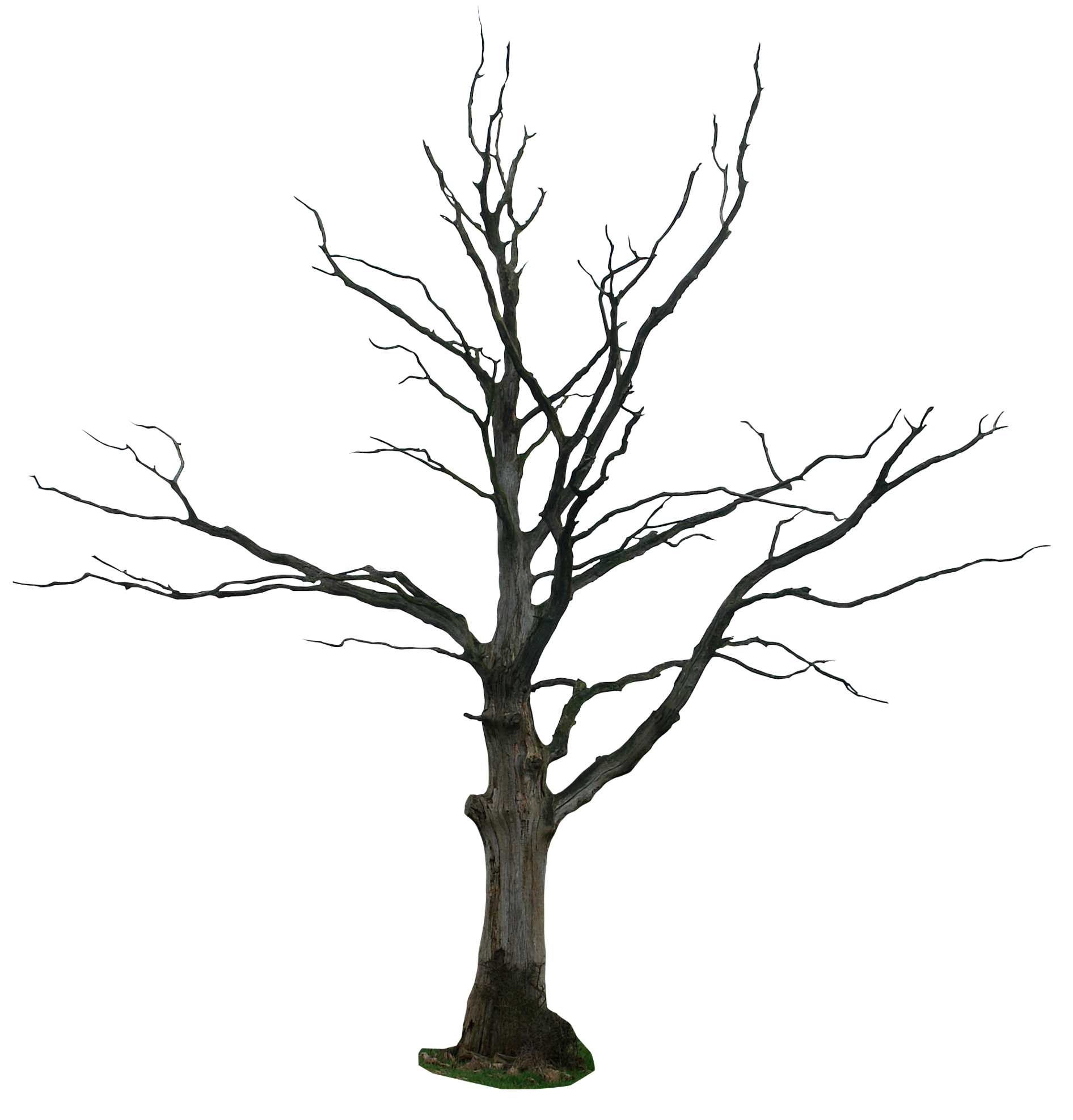 1892x1975 Dead Tree Drawing Clipart