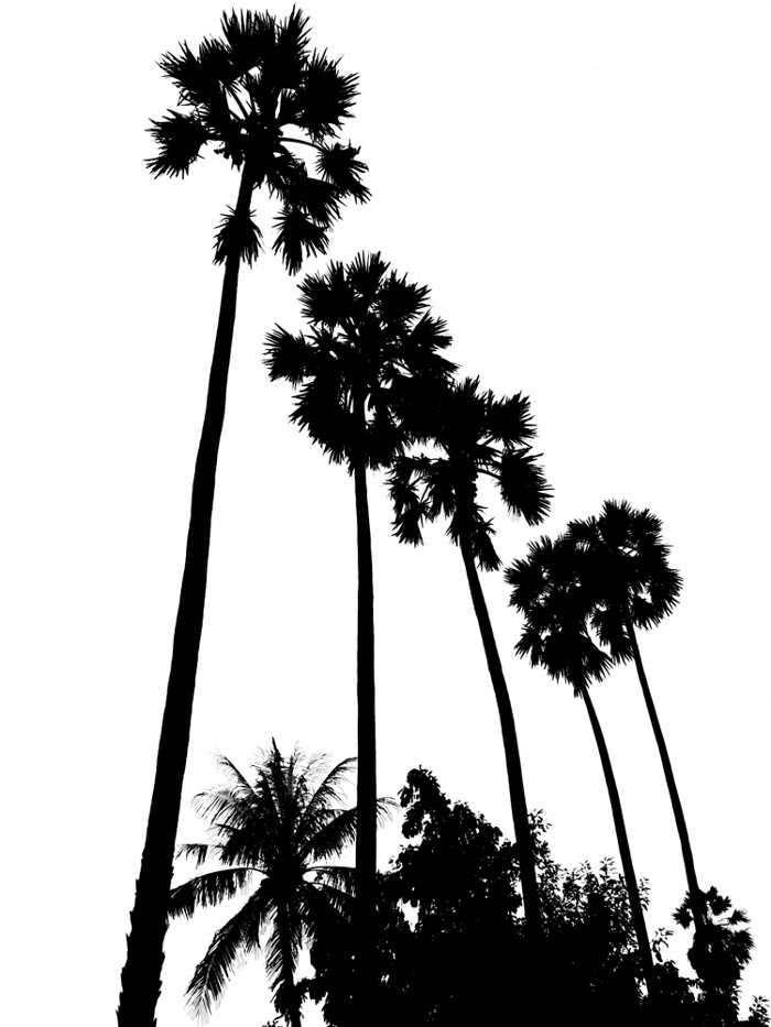 700x933 Drawn Palm Tree Black And White