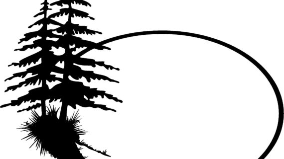 570x320 Simple Pine Tree Drawing Black And White Pine Tree Outline