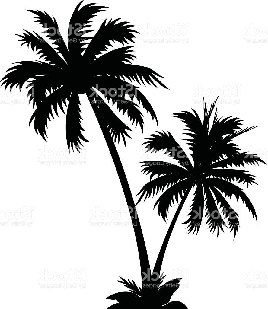 888x1024 Best Free Black And White Vector Icon Of Two Palm Trees Drawing