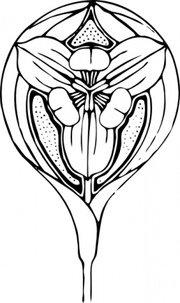 180x303 Tulip Clip Art, Vector Tulip