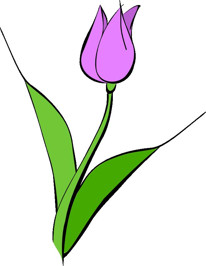 659x850 Tulip Black And White Clipart