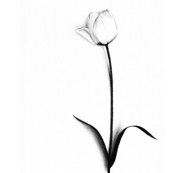 736x736 Best Tulip Clipart Ideas Tulip Tattoo, Bird