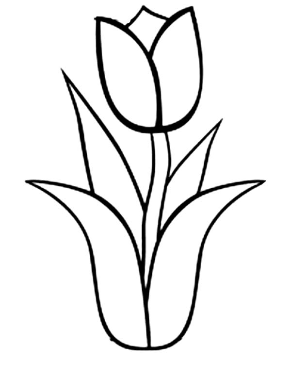 600x777 Tulip Clipart Line Drawing Flower