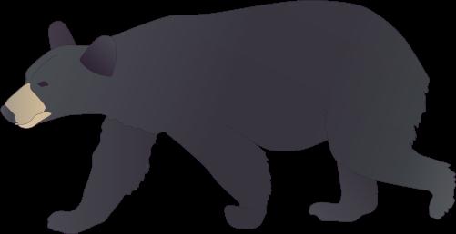 Black Bear Drawing | Free download best Black Bear Drawing ...