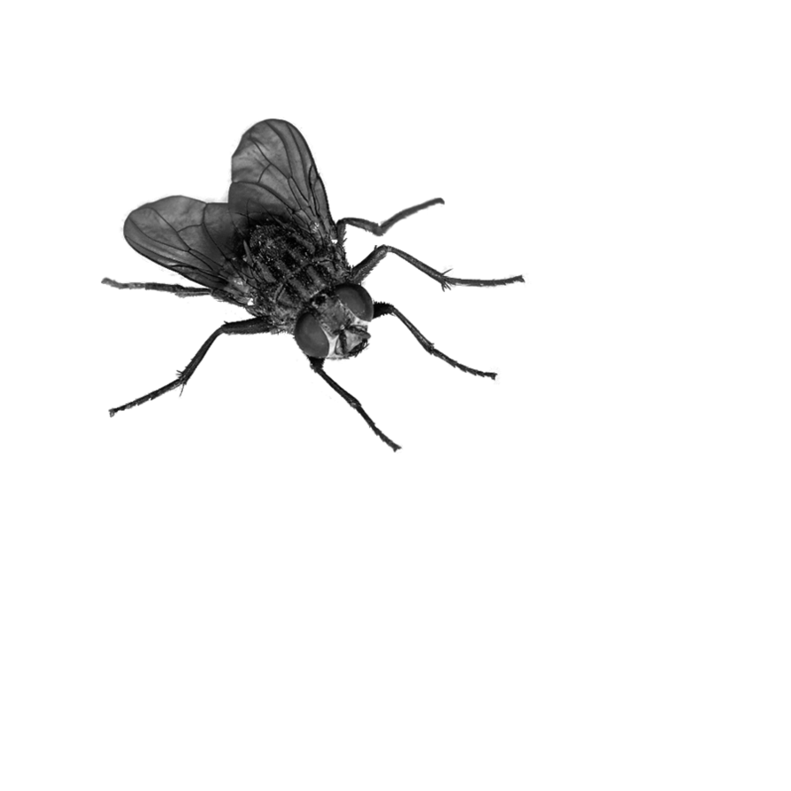 894x894 Fly Png Image, Free Download Fly Png Pictures