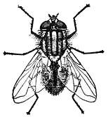 154x168 House Fly Clipart