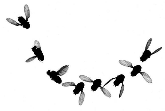 654x439 Tiny Flies Clipart