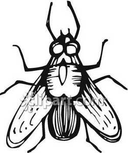251x300 And White Image Of A Fly