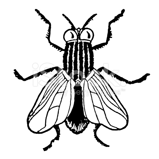 556x556 And White Fly Clipart