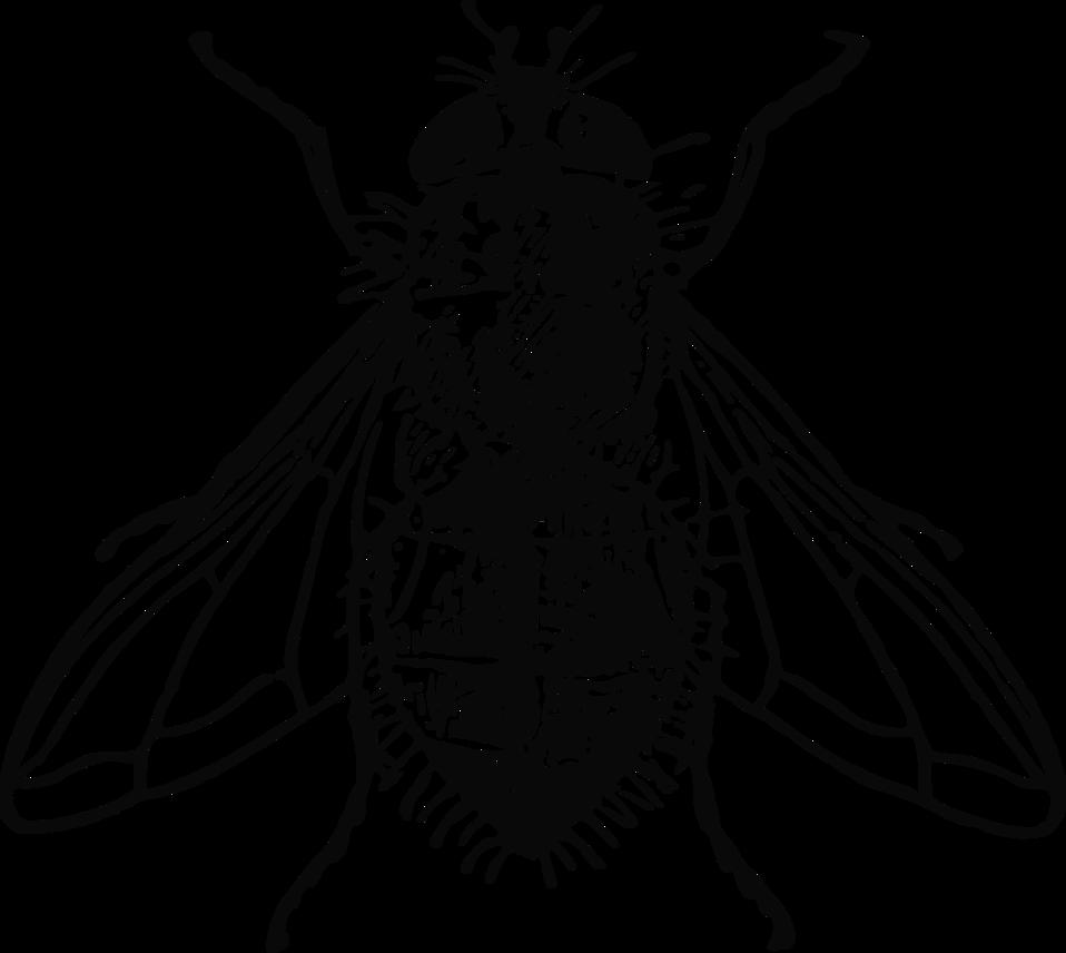 958x856 Bugs Clipart House Fly