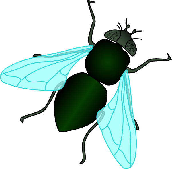 600x588 Clipart Fly