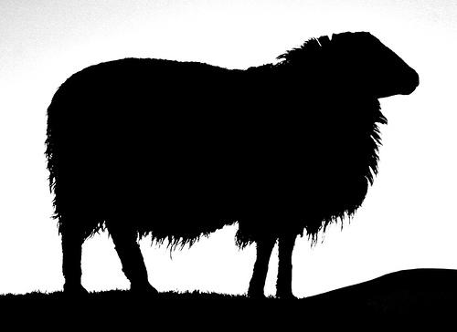 500x364 Sheep Clipart Silhouette