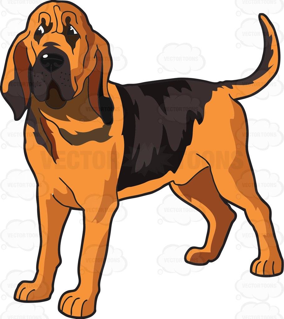 911x1024 Bloodhound Clipart