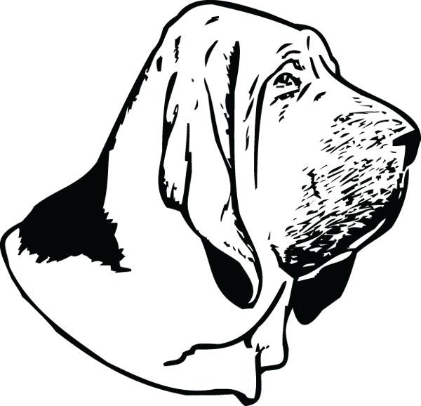 600x578 Bloodhound Clipart Head