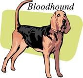170x159 Clipart Of Bloodhound U10389653