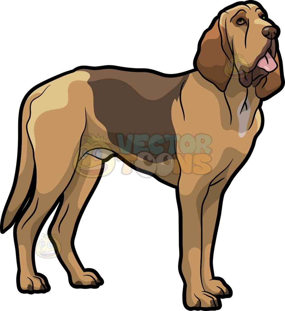 939x1024 Bloodhound Clipart