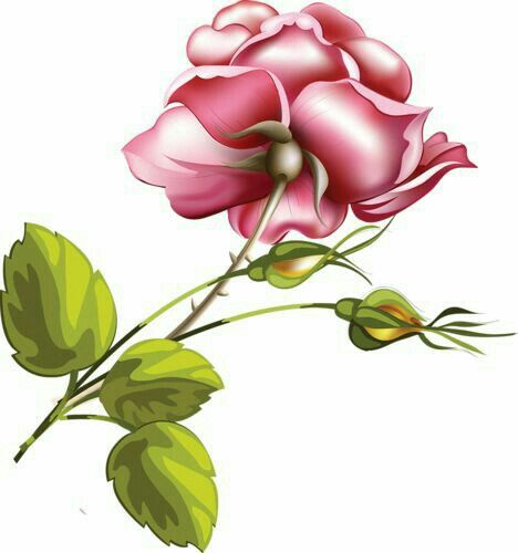 Blossoms Clipart