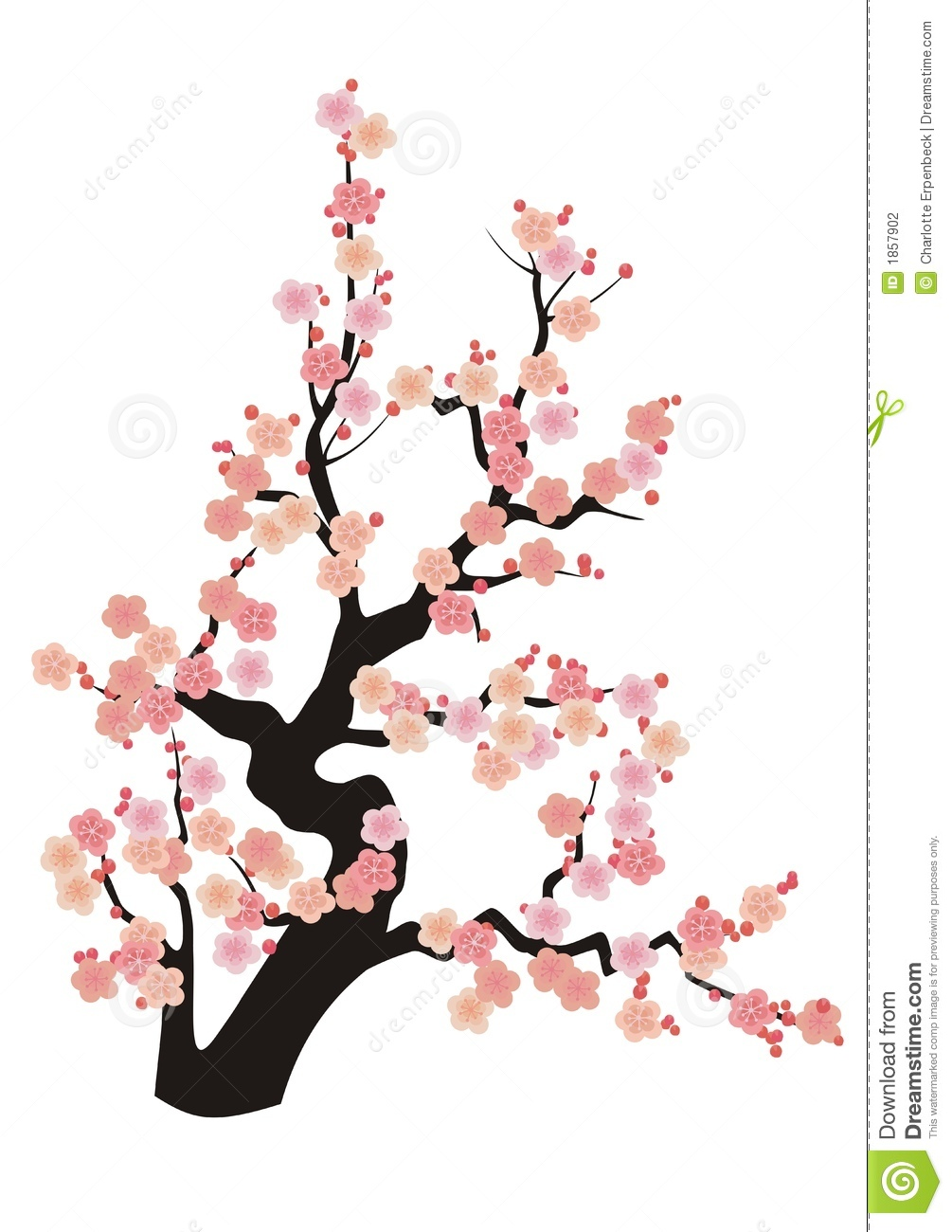 1005x1300 Japanese Flowering Cherry Clipart