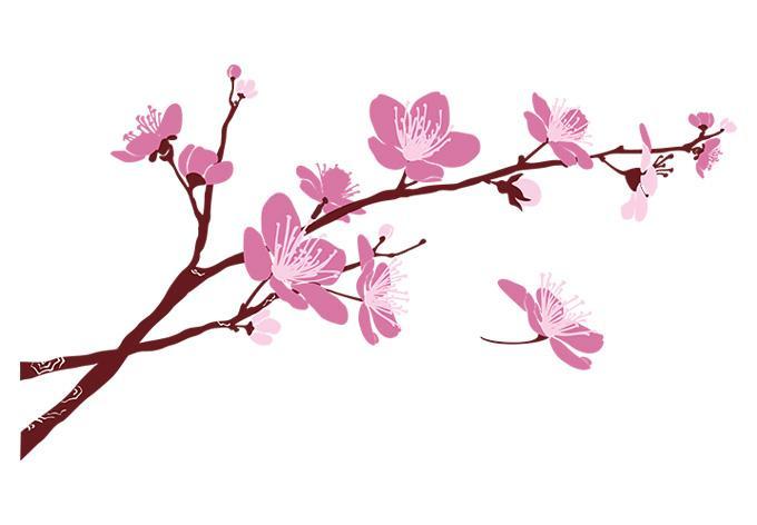680x472 cherry blossom border free clip art