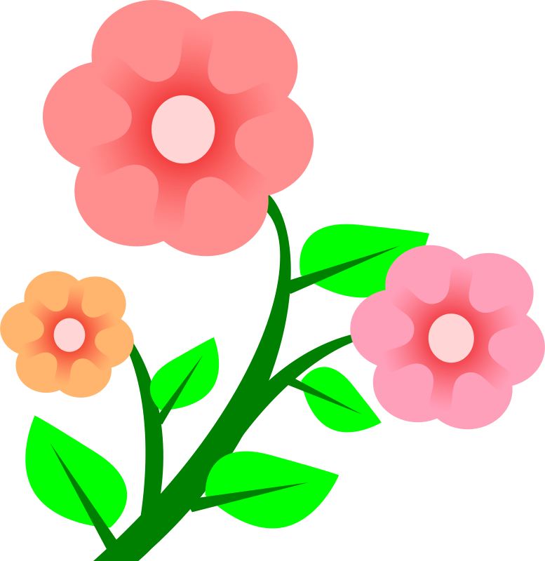 777x800 Blossom Clipart Bloom