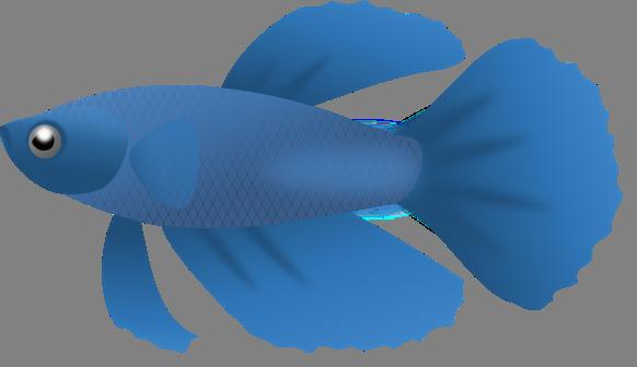 582x336 Fish Clip Art Free Fish Sketch Clip Art Vector Clip Art Clipartix