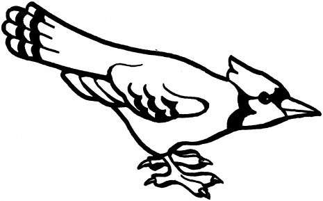 465x289 Blue Jay Clipart Black And White