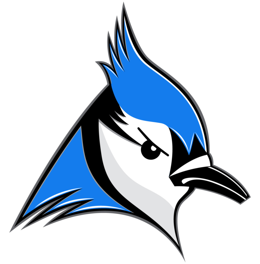 1000x1014 Blue Jay Clipart Sketch