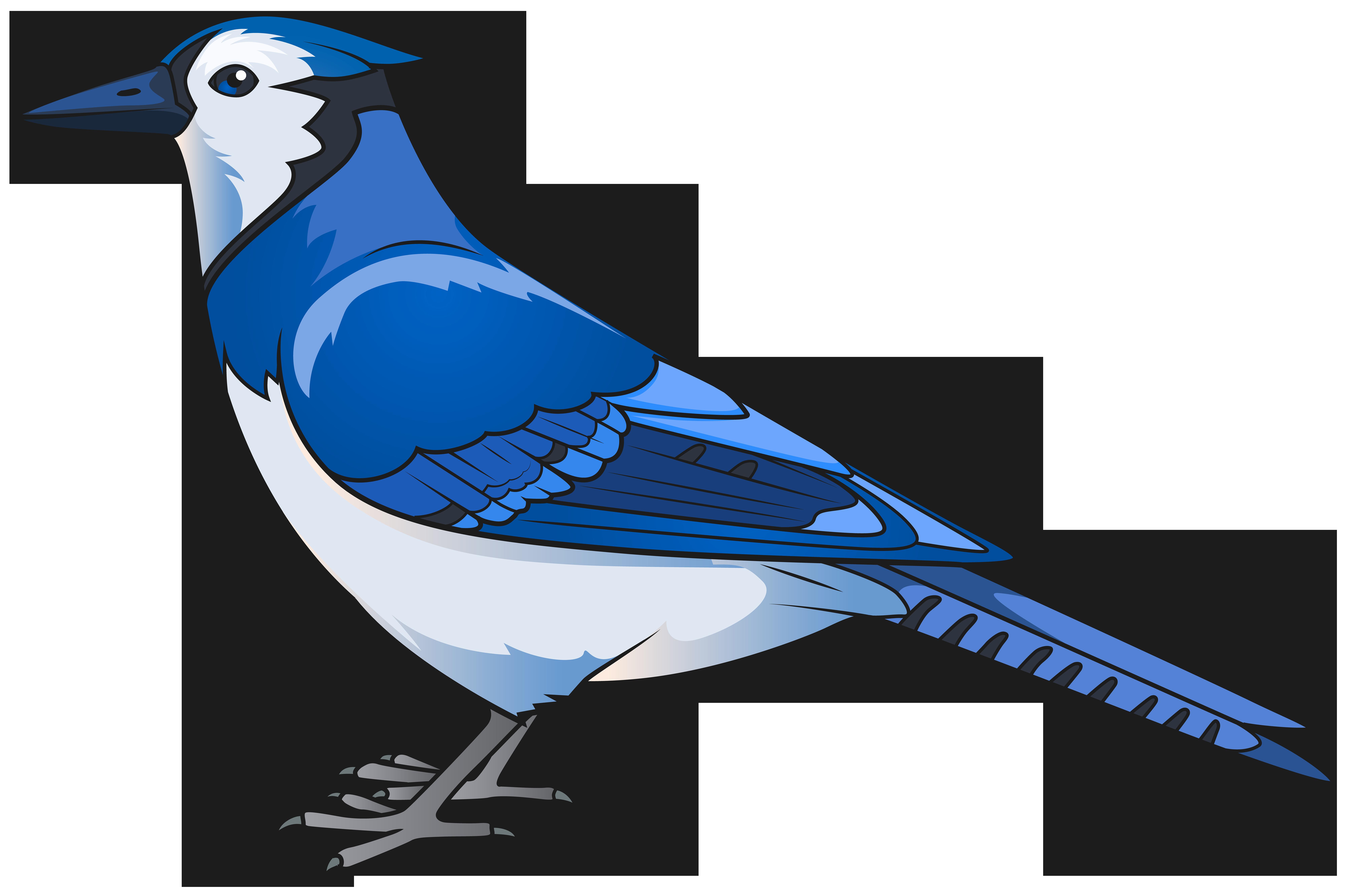 8000x5325 Jay Clipart Bird