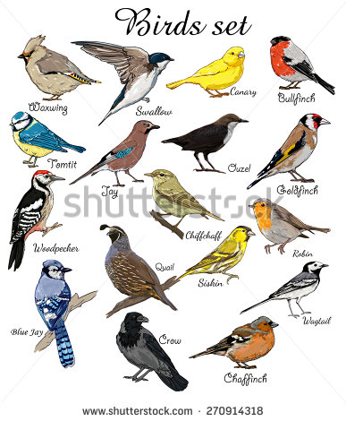 387x470 Big Set Birds. Birds Flying, Animals, Bird Silhouette, Bird Vector