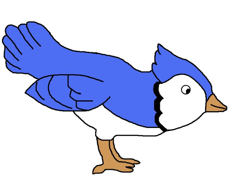 736x573 Blue Jay Clipart (29+)