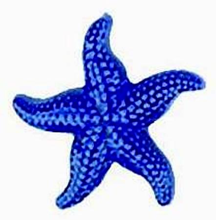 442x450 Light Blue Clipart Starfish