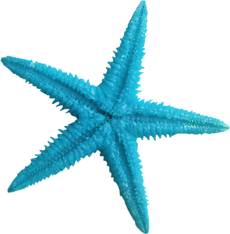 785x800 Turquoise Clipart Blue Starfish