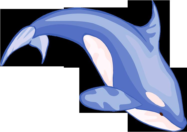 750x531 Blue Whale Clipart Simple