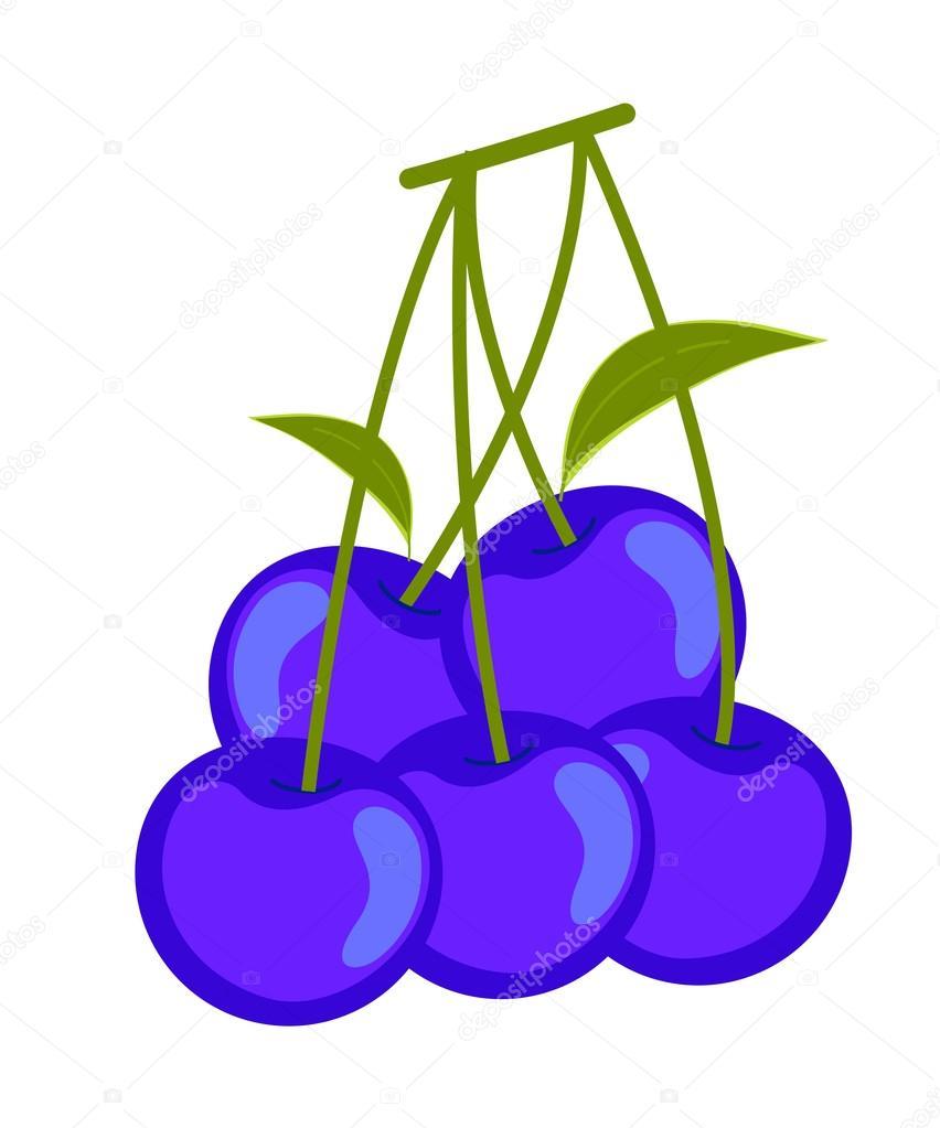 852x1023 Blueberries Vector Clipart Stock Vector Baavli