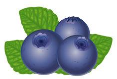 235x160 Blueberry Clipart Vector
