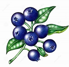 239x232 Free Blueberry Clipart