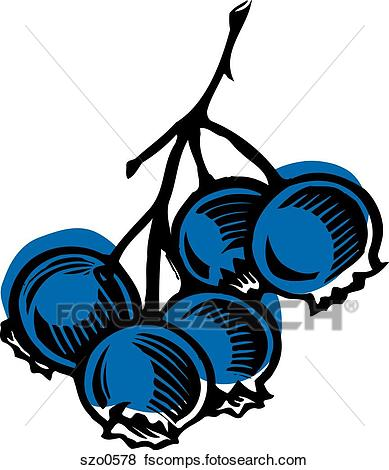 389x470 Stock Illustration Of Bunch Of Blueberries Illustrated On