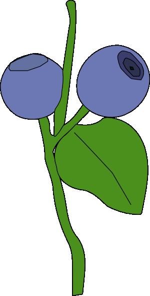 300x591 Blue Berry Clip Art