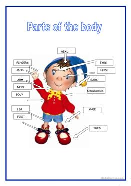 Body Parts Pictures