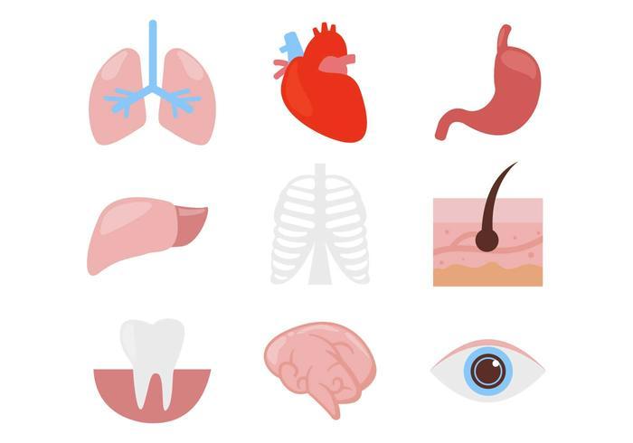 700x490 Free Human Organ Body Parts Icons Vector