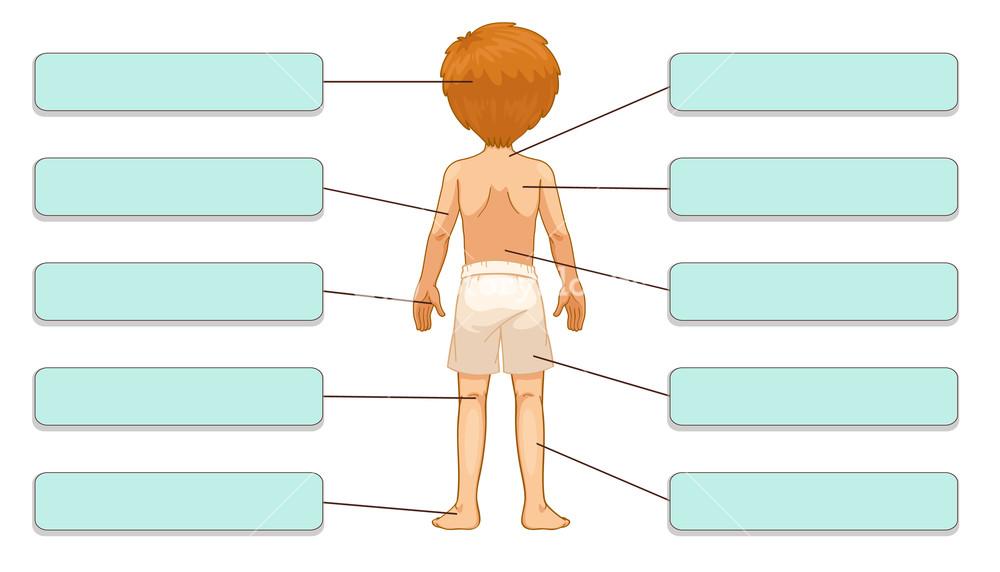 1000x572 Illustration Of Body Parts Labels (Back) Royalty Free Stock Image